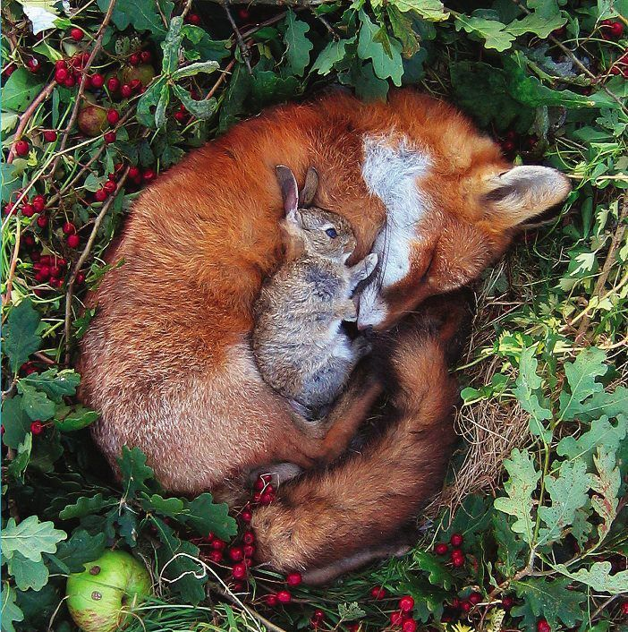 fox and bunny. No words.