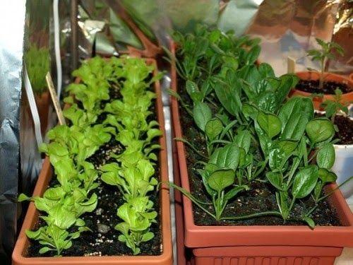 Container Garden Ideas Vegetables best 25+ organic container gardening ideas on pinterest
