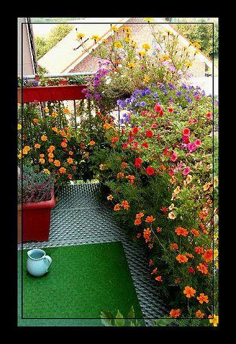 Teraz Ve Balkon Çiçekleri