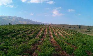Blogging Fair Trade Lebanon: Deir El Ahmar