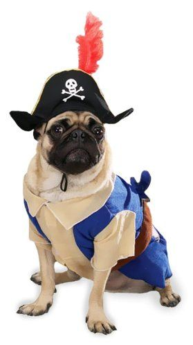pirate pup dog costumes dog halloween costume just needs a eye patch