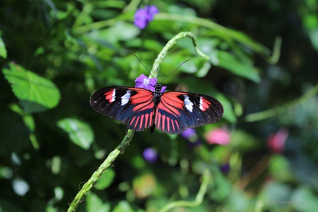 Butterfly Conservatory in Niagara Falls, Ontario. By A Nerd At Large, via Flickr www.anerdatlarge.com