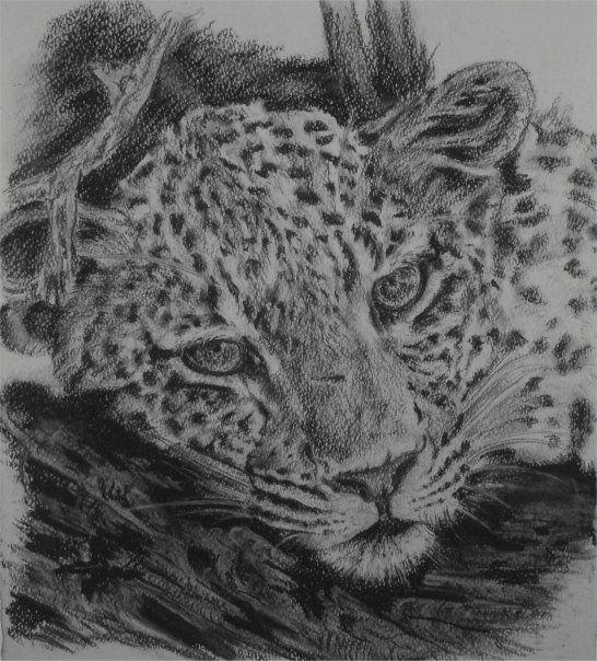 Leopard Resting on Log