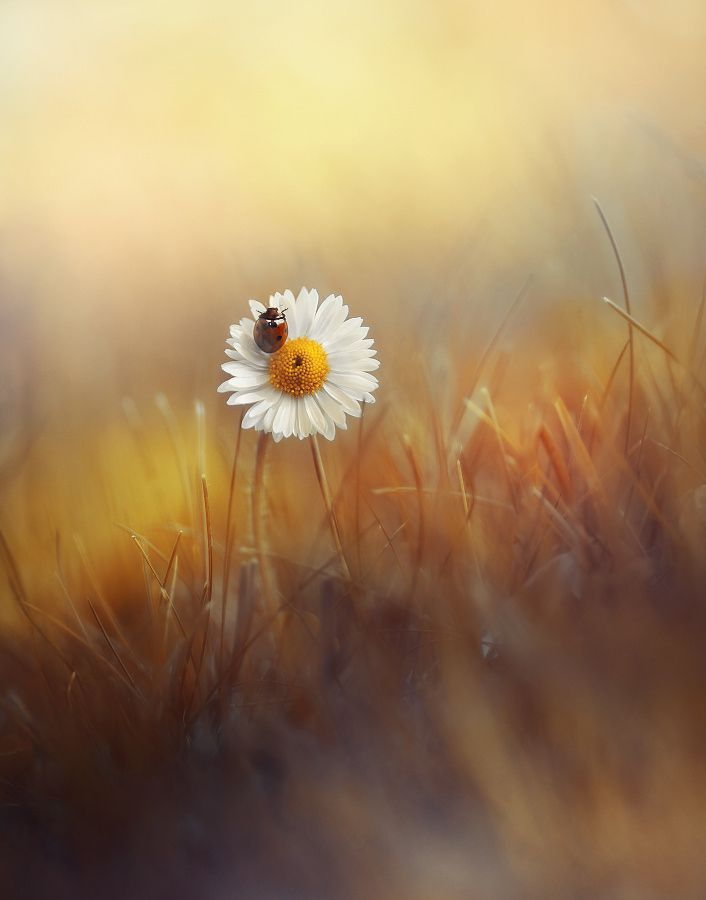 Spring by Laura Pashkevich on 500px