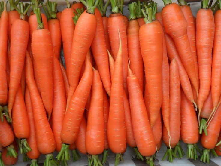 Вырастить хорошую морковь можно, если воспользоваться рекомендациями специалистов и учесть народный опыт. Грядку под морковь желательно приготовить с осени. В кислую почву добавляют известь, перекап…