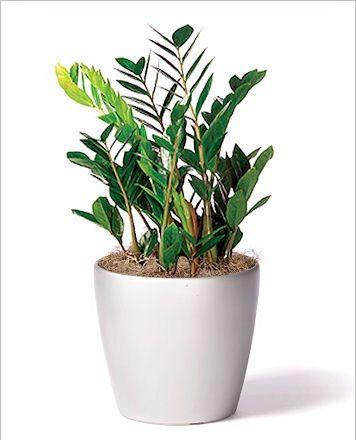 25 best best office plants ideas on pinterest - Indoor desk plants ...