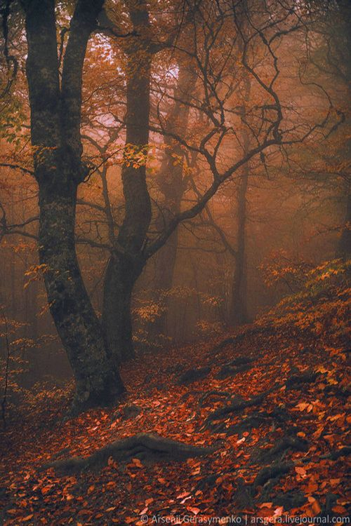 etherealvistas:  Magic Forest in Crimea (Ukraine) by Arsenii...