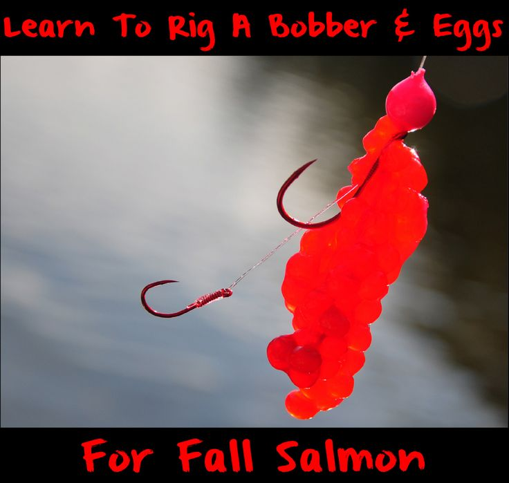 By Terry J. Wiest  Is there anything more effective than good cured roe for salmon? Not that I'm aware of. I love to twitch for coho, but if I could only use one technique for all salmon, float fishing with eggs knocks the socks off any other technique.    Here's