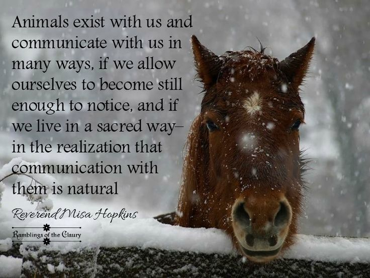 Animals exist with us and communicate with us in many ways, if we allow ourselves to become still enough to notice, and if we live in a sacred way–in the realization that communication with them is natural #animals #communication #horse #listen #sacred #listen