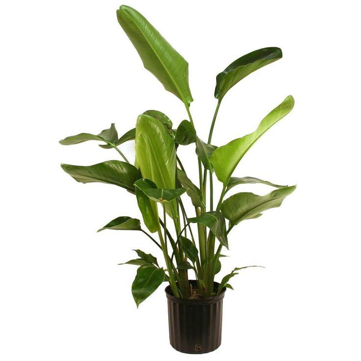 21 best planter pots images on pinterest green plants indoor plants and landscaping. Black Bedroom Furniture Sets. Home Design Ideas