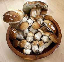 Edible mushroom - Wikipedia, collection of Boletus edulis of varying ages  ew920