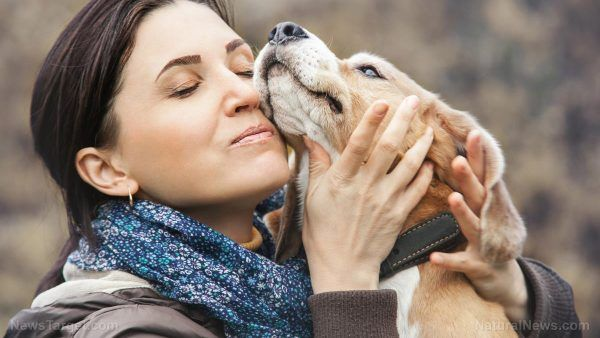 Canine flu isn't serious or contagious to humans, but hey, there are a couple of vaccines for that anyway – NaturalNews.com