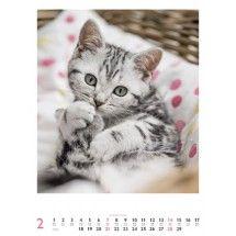 Katzen - ART&IMAGE - Kalender 2016