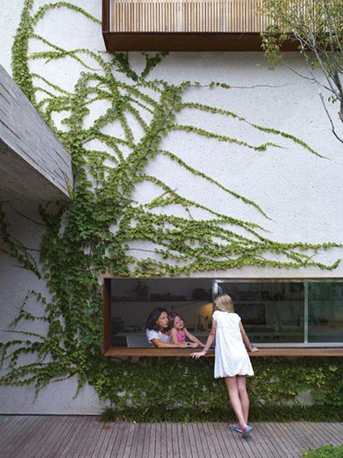 vine wall - outdoor bar