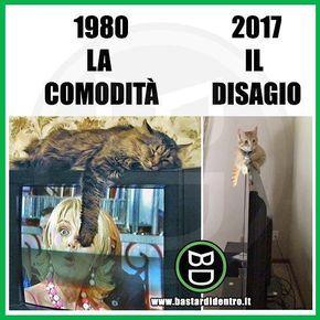 Comodità e disagio Tagga i tuoi amici e #condividi #bastardidentro #gatto #tv www.bastardidentro.it