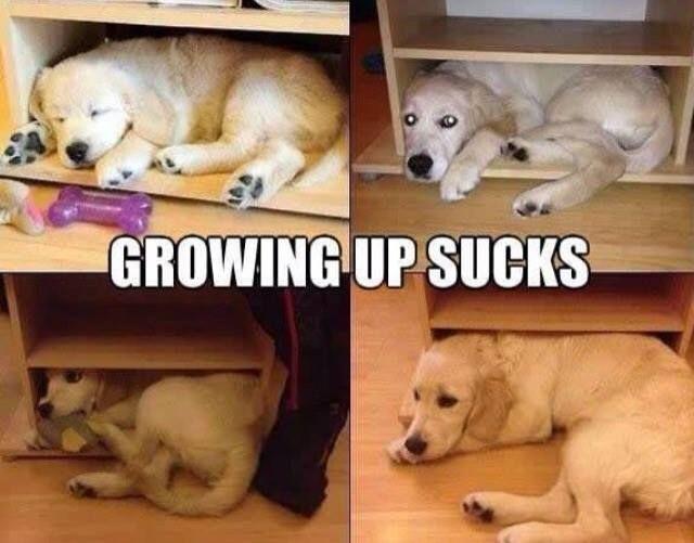 Il cane per de il pelo ma non il vizio :)  Si cresce ma le abitudini non cambiano.. :)