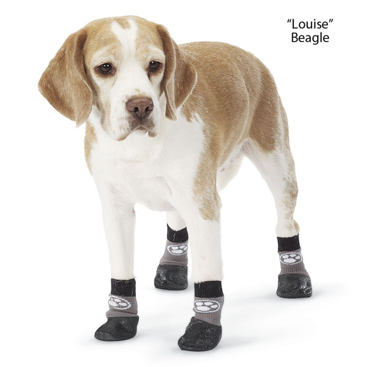 Set Of 4 Grippers Traction Socks Animals Dog Special