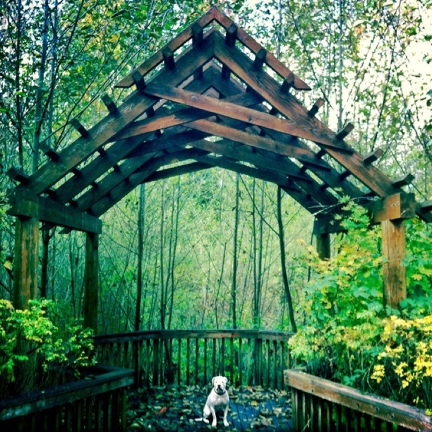 205 best living in snohomish county images on pinterest snohomish discovered by ryan coleman lovely little trail to take you into the mill creek solutioingenieria Choice Image