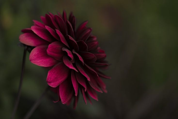 Download this free photo here www.picmelon.com #freestockphoto #freephoto #freebie /// Red Bloom in the Jungle | picmelon