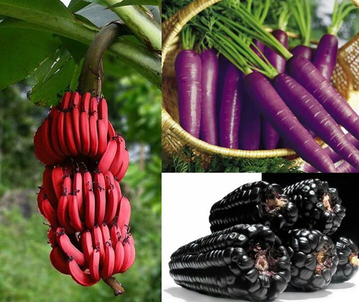 Red bananas, purple carrots and corn. | Crazy - Oddities | Pinterest