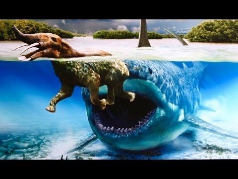 Real Megalodon Shark Sightings! Biggest Sharks of All Time ...