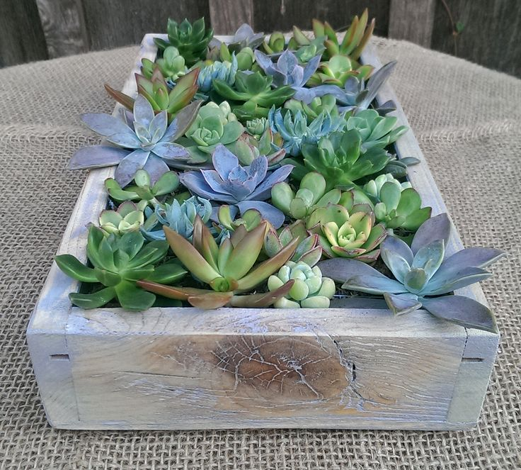 """6"""" x 12"""" cedar wood succulent box in faux finish (blue patina). Designed by 2ndNatureSucculents (Etsy). Second Nature Succulents of San Diego. Succulents gifts are great for weddings, Mother's Day, birthdays, holidays, or any special occasion. Help support our small, family-owned and operated business."""