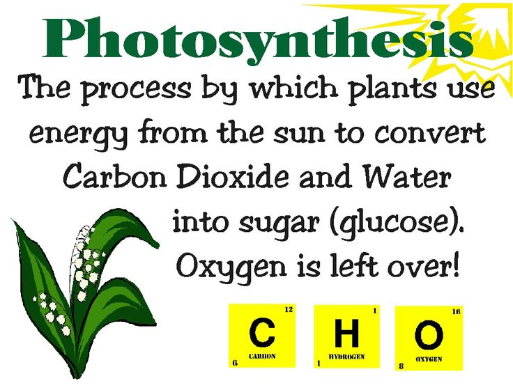 Photosynthesis Lab Experiments