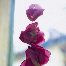 Composizione fiori secchi: tende per interni   Donna Moderna