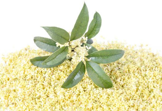 Osmanthus - rich yet delicate, with hints of Apricot and Peach. Discover it in our new perfume - RUE AGATHA
