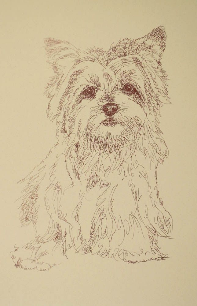 Yorkshire Terrier: Dog Art Portrait by Stephen Kline, art drawn entirely from the words Yorkshire Terrier.  He also can add your dog's name into the lithograph. drawDOGS.com