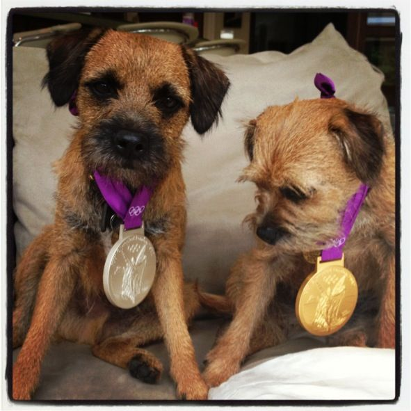 OMG, Look at Andy Murray's Dogs Wearing His Olympic Medals: Obsessed: Entertainment: glamour.com
