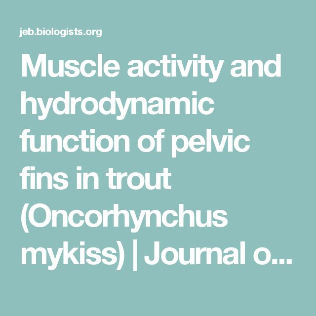 Muscle activity and hydrodynamic function of pelvic fins in trout (Oncorhynchus mykiss) | Journal of Experimental Biology