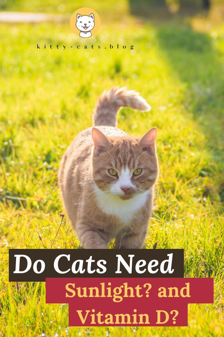 Do Cats Need Sunlight And Vitamin D Kitty Cats Blog In 2020 Cats Cat Fleas Treatment Cat Questions