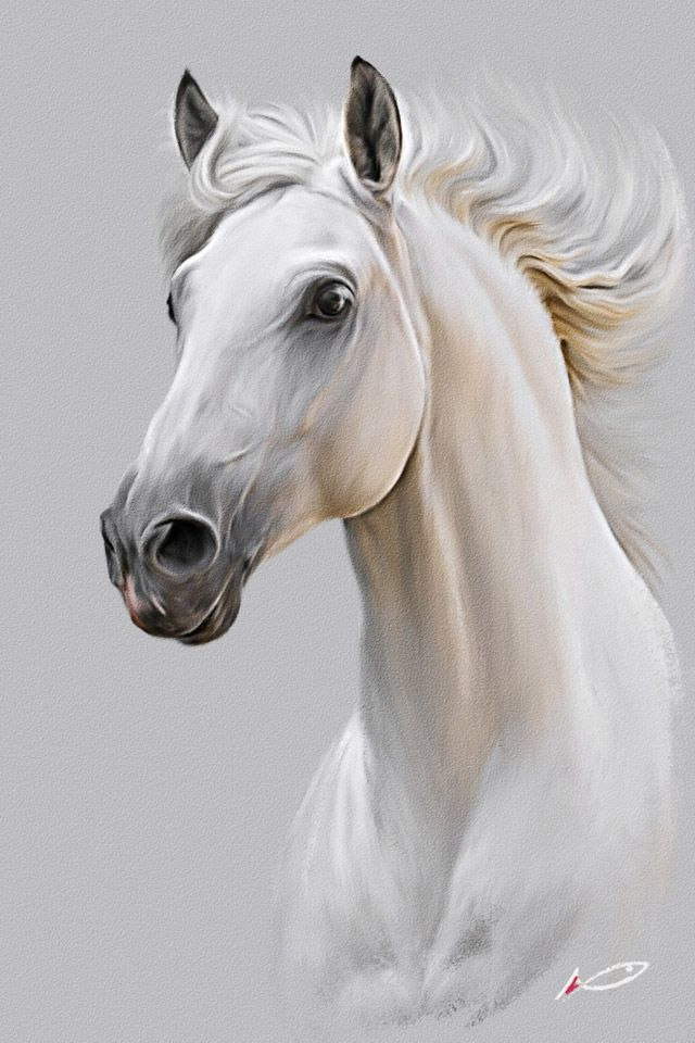 Horse by irudd on DeviantArt