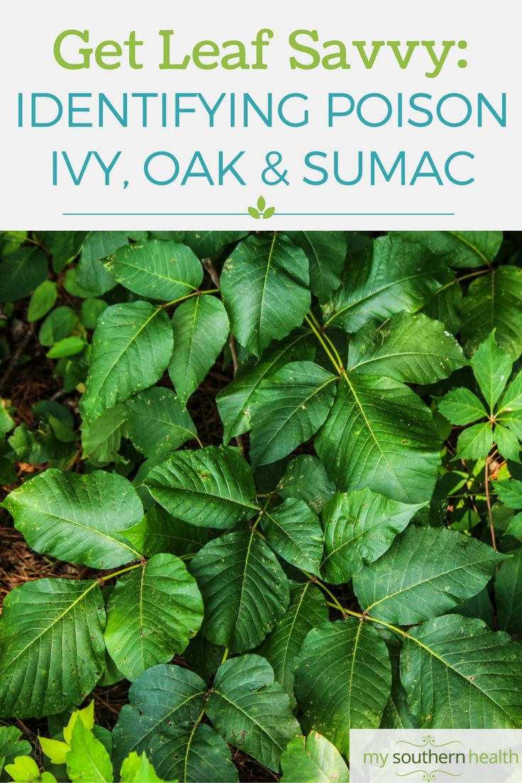 Identify Poison Ivy, Oak and Sumac.  Get Leaf Savvy!