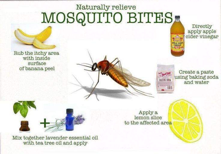 Home Remedies To Get Rid Of Lice: Home Remedies For Insects