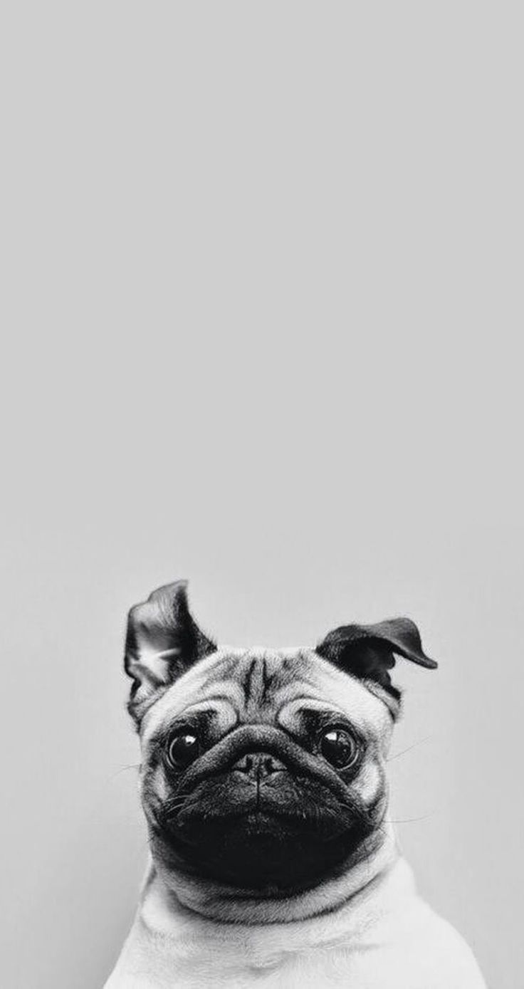 Kai iphone wallpaper tumblr - Puppy Love The Most Funny Cutest Free Your Wild See More Adorable Puppies Dogs Wallpaper