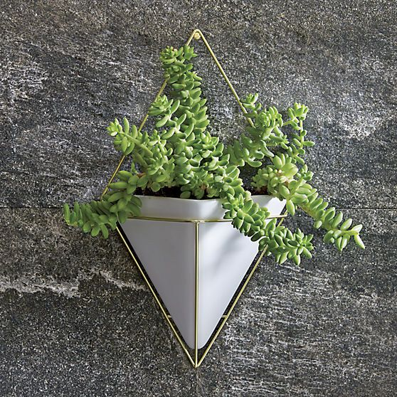 A minimalist wall-mounted planter.