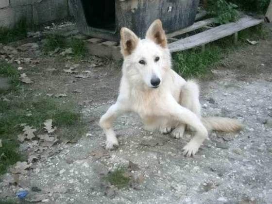 Εγκαταλειμμένος σκύλος με δυσμορφία στα πόδια βρήκε μια δεύτερη ευκαιρία στο εξωτερικό!