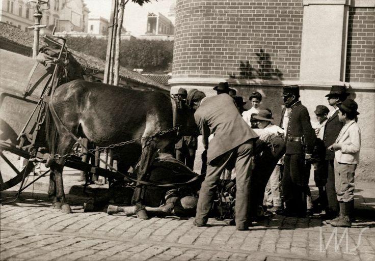 Pastore, Vincenzo  Cavalo da carroça de limpeza pública caído no chão  1910 circa  Rua 25 de Março esquina com rua Lourenço Gnecco, em frente ao Mercado Municipal.  São Paulo  SP  Brasil