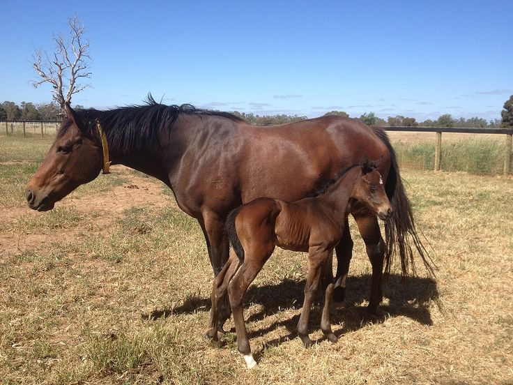 Excelebration filly from Nice Night