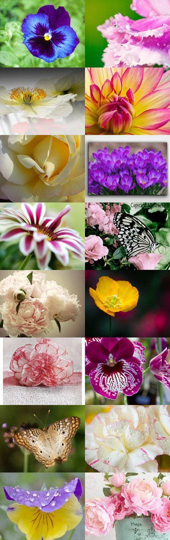 A Walk Through The Flower Garden by Sharon on Etsy--butterfly butterfly on rose carnation dreamy white floral floral art print floral fine art flower photography nature photo peony print pink peonies pink spring wall art pole oeillet print purple and white flower purple flower canvas with the peonies yellow rose