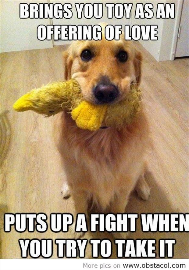 This could not describe my dog any better.. If you want to play, don't run away with the toy!!