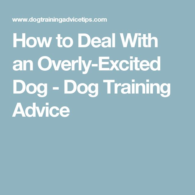 How to Deal With an Overly-Excited Dog - Dog Training Advice