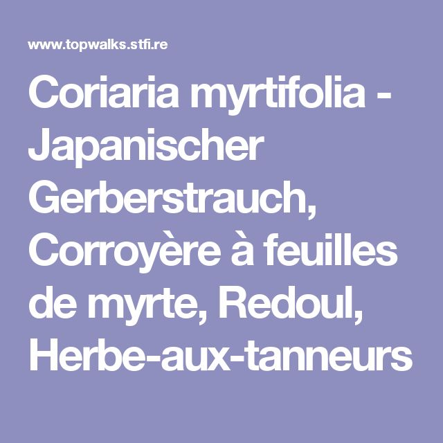 Coriaria myrtifolia - Japanischer Gerberstrauch, Corroyère à feuilles de myrte, Redoul, Herbe-aux-tanneurs
