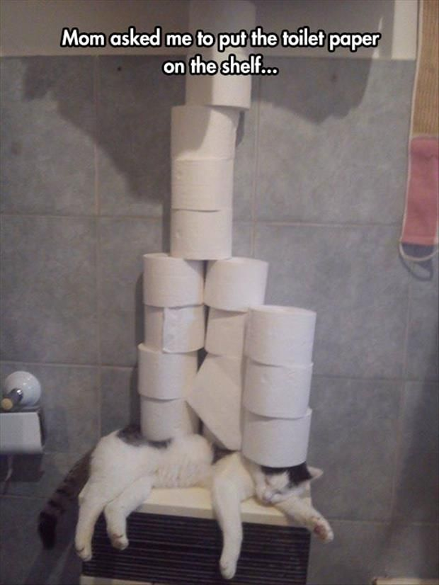 Mom asked me to put the toilet paper on the shelf | thingsonmycat | stuffonmycat | toilet paper on the cat
