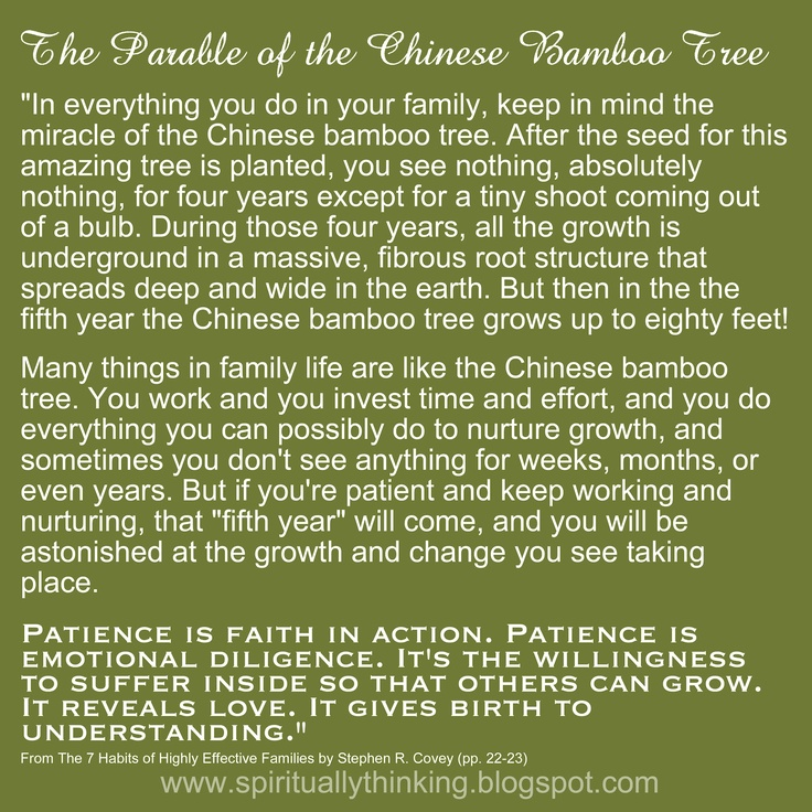 """...Many things in family life are like the Chinese bamboo tree. You work and you invest time and effort, and you do everything you can possibly do to nurture growth, and sometimes you don't see anything for weeks, months, or even years. ..."""