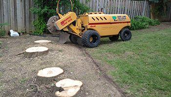 Tree stump Newmarket - Dave Lund tree services