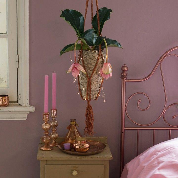 Een hangende Medinella in een romantische kamer #intratuin #herfst #romantisch