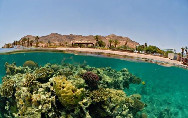 31 fotografias incríveis do limite que separa a água e a superfície